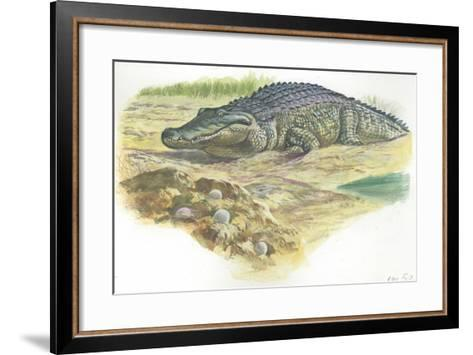 Nile Crocodile Crocodylus Niloticus Near its Laid Eggs--Framed Art Print