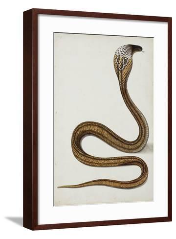 A Cobra (Maja Tripudians) with Hood Spread, 1785-89--Framed Art Print