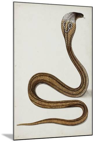 A Cobra (Maja Tripudians) with Hood Spread, 1785-89--Mounted Giclee Print