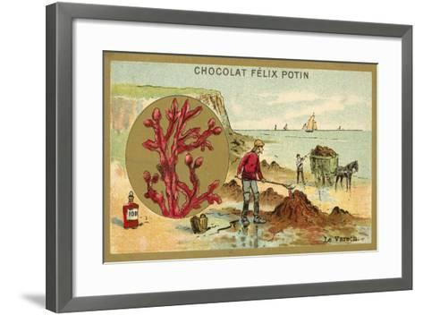Kelp--Framed Art Print