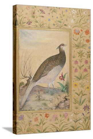 A Himalayan Cheer Pheasant, C.1620, Border C.1635--Stretched Canvas Print