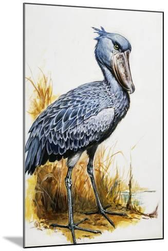 Shoebill or Whalehead (Balaeniceps Rex), Balaenicipitidae--Mounted Giclee Print