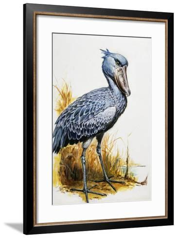 Shoebill or Whalehead (Balaeniceps Rex), Balaenicipitidae--Framed Art Print