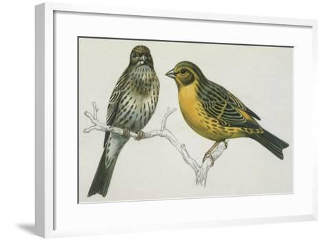Birds: Passeriformes, Canary (Serinus Canaria) Couple--Framed Art Print