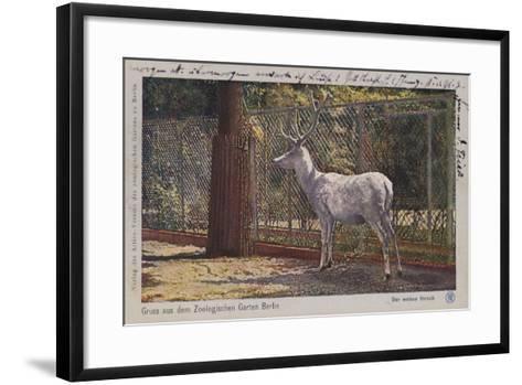 White Deer in the Zoo in Berlin--Framed Art Print
