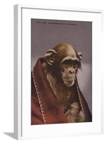 Chimpanzee in Cologne Zoo--Framed Art Print