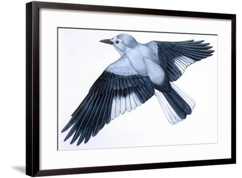 Birds: Passeriformes, Clark's Nutcracker (Nucifraga Columbiana)--Framed Art Print