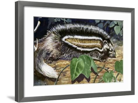 Maned Rat or Crested Rat (Lophiomys Imhausi), Muridae--Framed Art Print