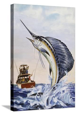 Indo-Pacific Sailfish (Istiophorus Platypterus), Istiophoridae--Stretched Canvas Print