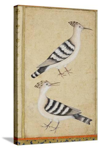 Hoopoes, C.1590--Stretched Canvas Print