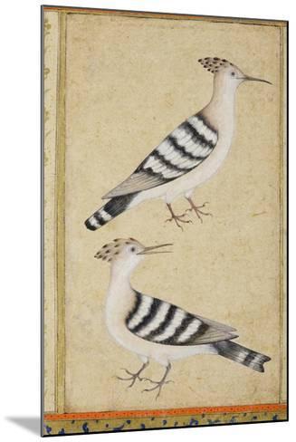 Hoopoes, C.1590--Mounted Giclee Print