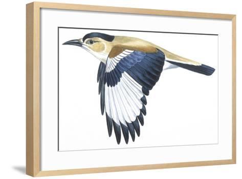 Birds: Passeriformes, Turkestan Ground-Jay (Podoces Panderi)--Framed Art Print