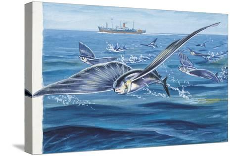 Flying Fishes Flying over a Sea (Cypselurus Heterurus)--Stretched Canvas Print