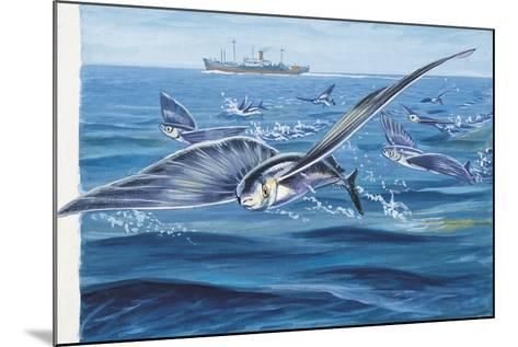 Flying Fishes Flying over a Sea (Cypselurus Heterurus)--Mounted Giclee Print