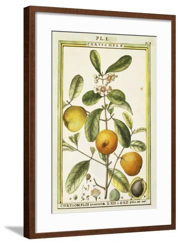 Chrysomele (Chrysomelis Senticosa), 1789--Framed Art Print