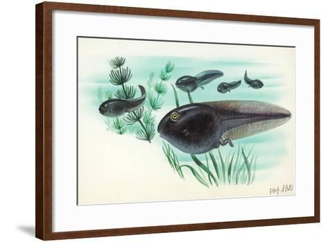 Toad Tadpoles--Framed Art Print