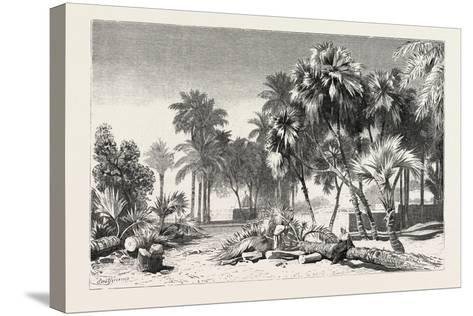Date and Doom Palms. Egypt, 1879--Stretched Canvas Print