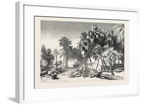 Date and Doom Palms. Egypt, 1879--Framed Art Print