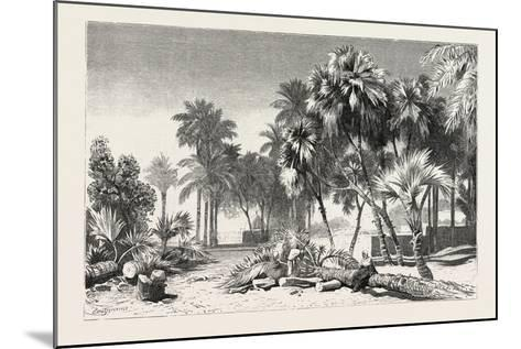 Date and Doom Palms. Egypt, 1879--Mounted Giclee Print