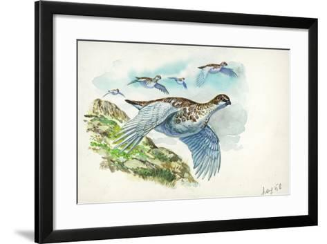 Flock of Rock Ptarmigans Lagopus Muta in Flight--Framed Art Print