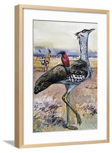 Kori Bustard (Ardeotis Kori), Otididae--Framed Art Print