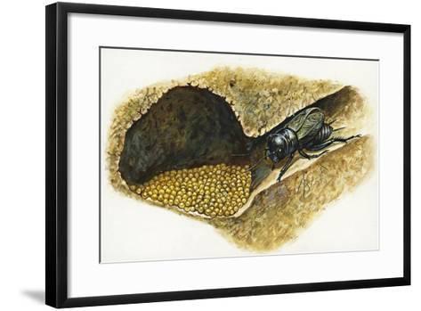 Field Cricket Gryllus Campestris--Framed Art Print