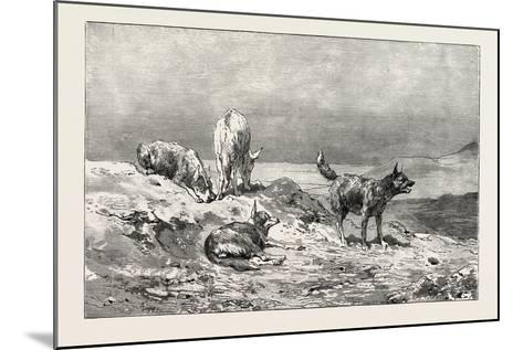 Village Dogs. Egypt, 1879--Mounted Giclee Print