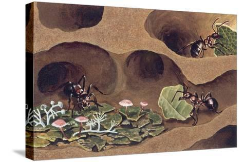 Three Ants in an Anthill--Stretched Canvas Print