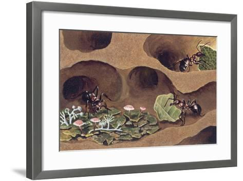 Three Ants in an Anthill--Framed Art Print