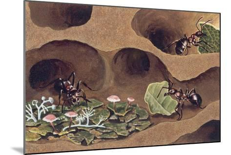 Three Ants in an Anthill--Mounted Giclee Print