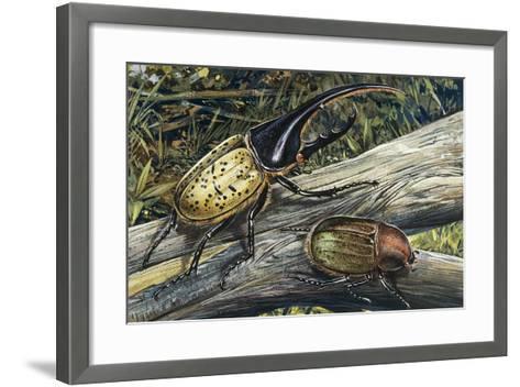 Hercules Beetle (Dynastes Hercules), Scarabaeidae--Framed Art Print