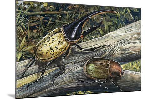 Hercules Beetle (Dynastes Hercules), Scarabaeidae--Mounted Giclee Print