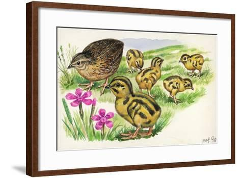 Common Quail Coturnix Coturnix with Chicks--Framed Art Print