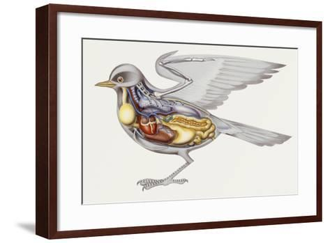 Zoology: Birds, Anatomy--Framed Art Print