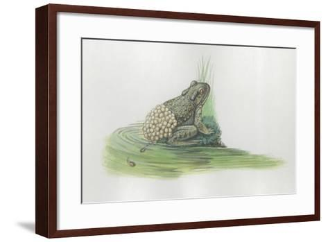 Close-Up of a Midwife Toad Deposits Eggs in Water--Framed Art Print