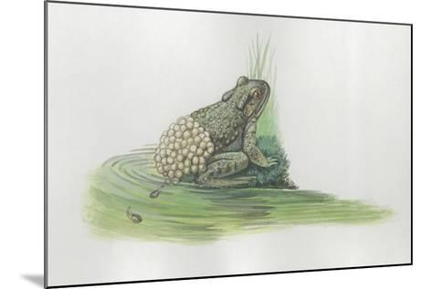 Close-Up of a Midwife Toad Deposits Eggs in Water--Mounted Giclee Print