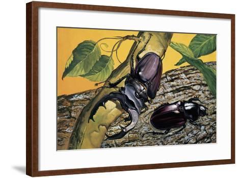 Close-Up of Two Stag Beetles (Lucanus Cervus)--Framed Art Print