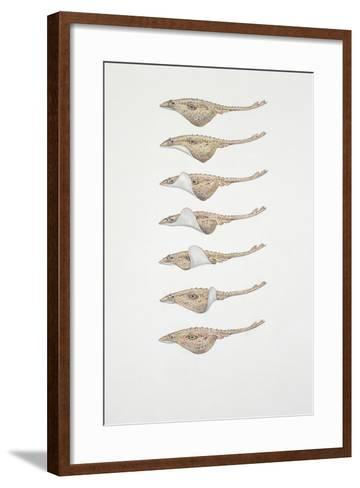 Close-Up of a Group of Spotted Eagle Ray Fish--Framed Art Print