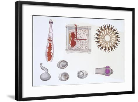 Medium Group of Patyhelminthes--Framed Art Print