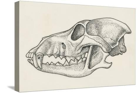 Skull of Wolf (Canis Lupus), Drawing--Stretched Canvas Print