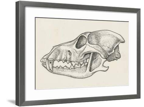 Skull of Wolf (Canis Lupus), Drawing--Framed Art Print