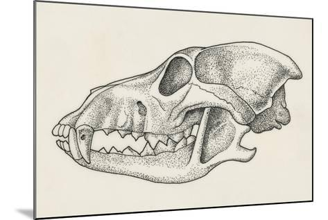 Skull of Wolf (Canis Lupus), Drawing--Mounted Giclee Print