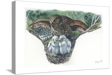 Common Buzzard Buteo Buteo at Nest with Young--Stretched Canvas Print