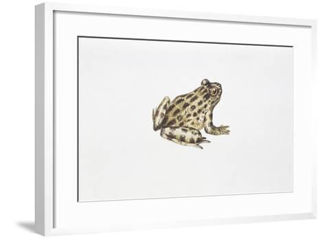 Tyrrhenian Painted Frog (Discoglossus Sardus)--Framed Art Print