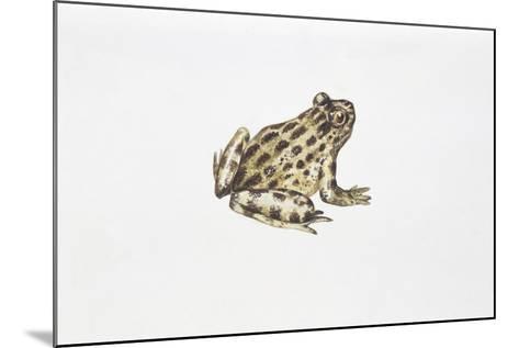 Tyrrhenian Painted Frog (Discoglossus Sardus)--Mounted Giclee Print