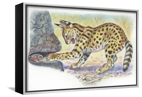 Serval Felis Serval Catching Reptile--Framed Canvas Print