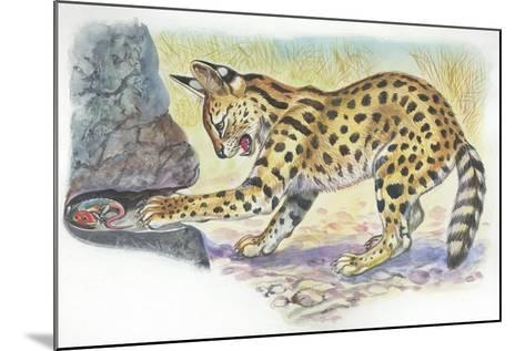 Serval Felis Serval Catching Reptile--Mounted Giclee Print