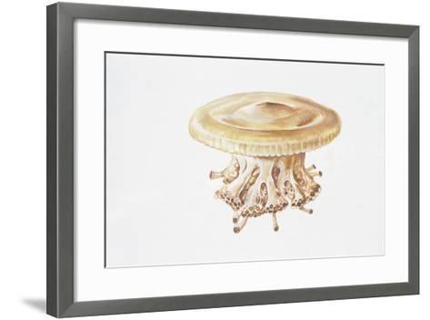 Jellyfish (Cotylorhiza Tuberculata)--Framed Art Print