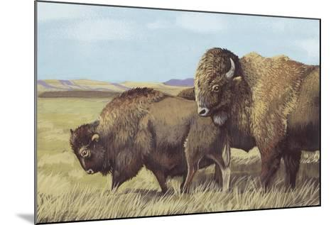 American Bison (Bison Bison)--Mounted Giclee Print