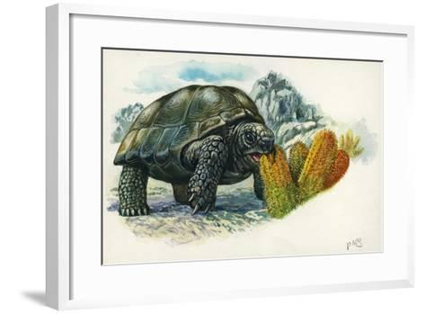 Giant Tortoise Eating Cactus--Framed Art Print